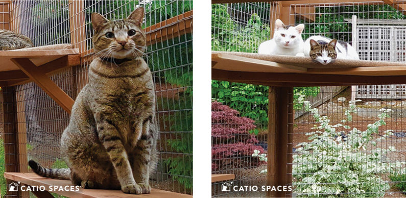 Catio Cat Enclosure Interior 2up Deck