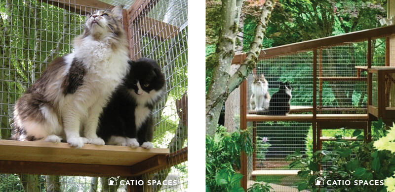 Catio Cat Enclosure Interior 2up Garden Beard Haven