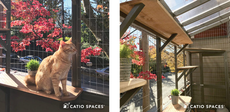 Catio Cat Enclosure Interior 2up Urban Deck Shires