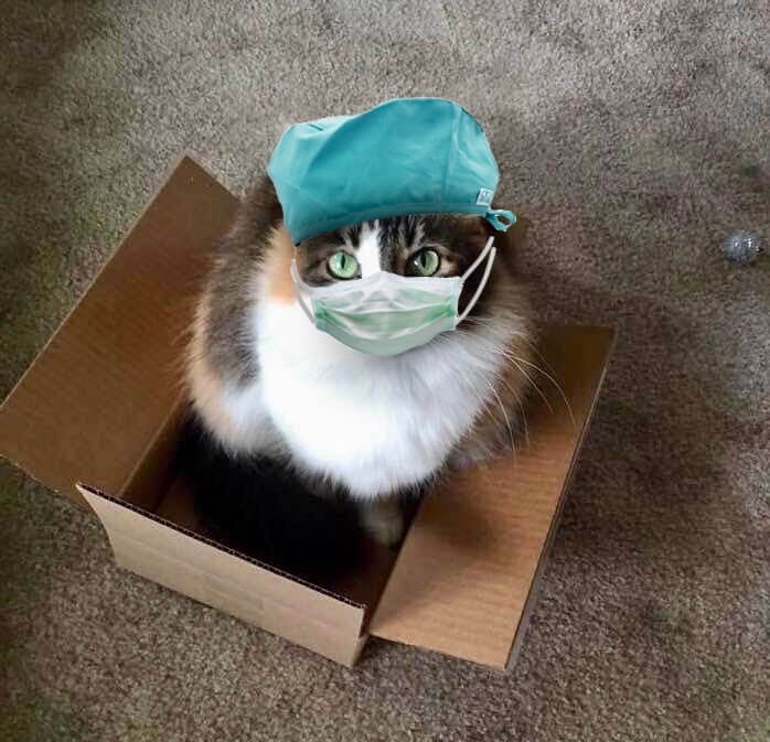 Cats in Quarantine Go Crazy for DIY Catios