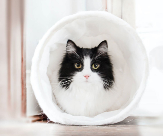 Happy Take Your Cat to the Vet Day From Catio Spaces