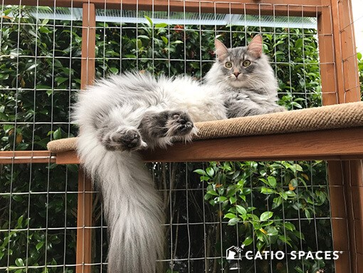 Celebrate National Happy Cat Month with Catio Spaces