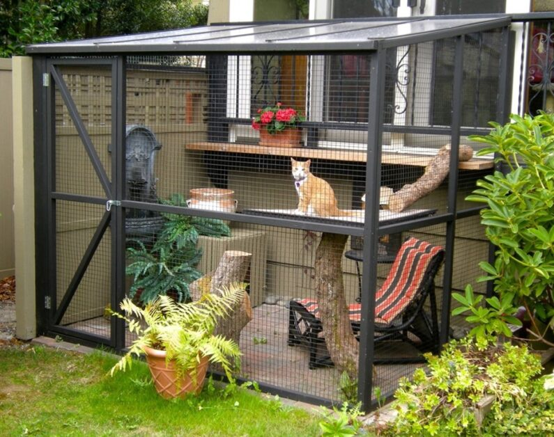 Join Catio Spaces in Honoring National Animal Safety and Protection Month