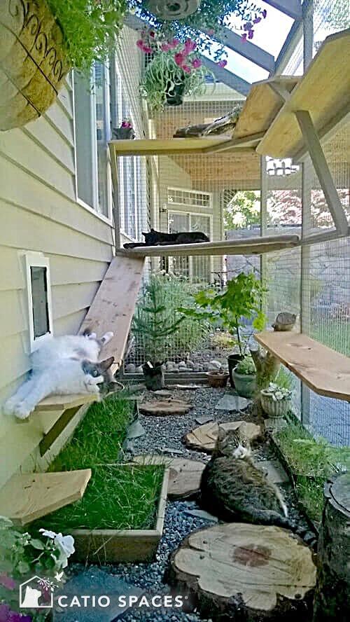 Catios Cat Enclosures Top Ten Benefits