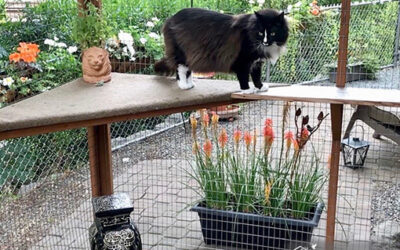 Diy Catio Plans Catiospaces Happy Cats Catios