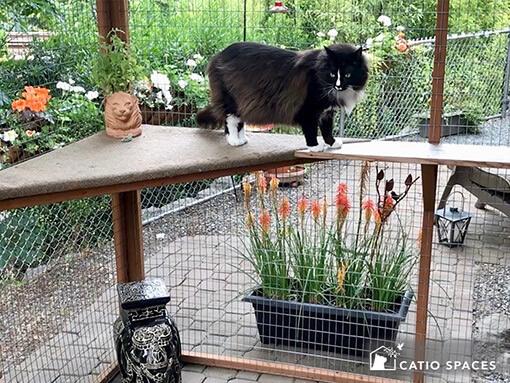 Diy Catio Plans Catiospaces Happy Cats Catios