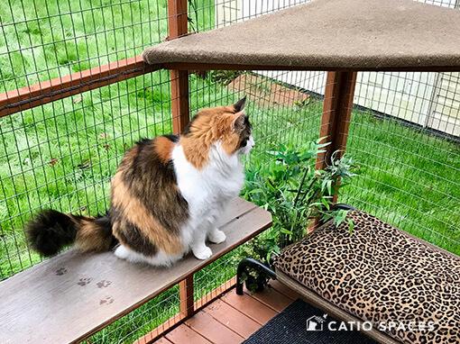 Catio Cat Enclosure Cookie Low Shelf Senior Catiospaces