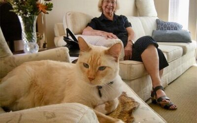 Catios For Senior Cats and Their Senior Parents