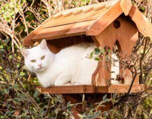 Catio Cat Enclosure Birdhouse Catiospaces (1)