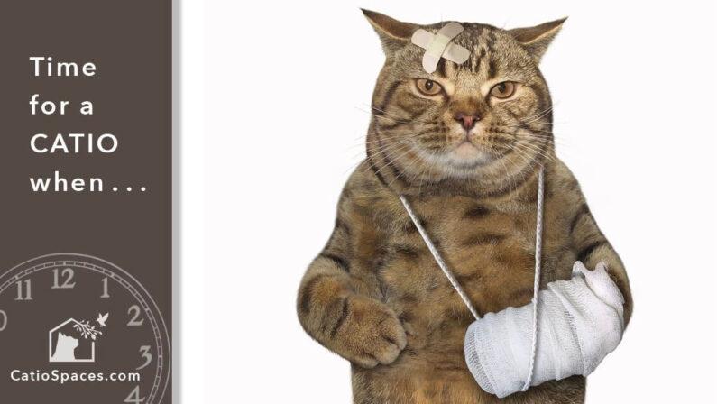 Catio Cat Enclosure Time Fighter Catiospaces (1)