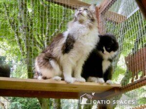 Catios Cat Enslosure Carter Bandit Wm Catiospaces (1)