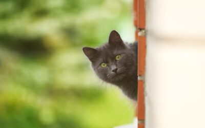 A Catio Cure for Spring Fever: April is Pet First Aid Awareness Month