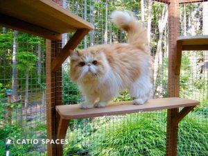 Catio Cat Enclosure Junior Standing Shelf Catiospaces