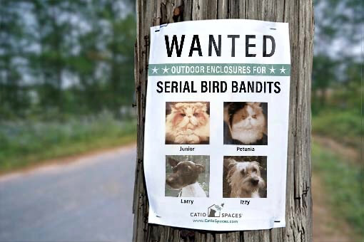 Catios Cat Enclosures Bird Bandit Wanted Poster Catiospaces