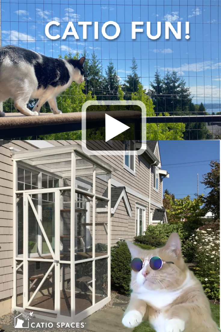 """Every day is fun in a catio! See our catio showcase featuring a variety of catios and happy cats enjoying the carefree catio lifestyle. Tabby Cevin, our """"Daddio"""" cat, was a great sport and earned his sunglasses on this project. Check out why life is good in a catio!"""