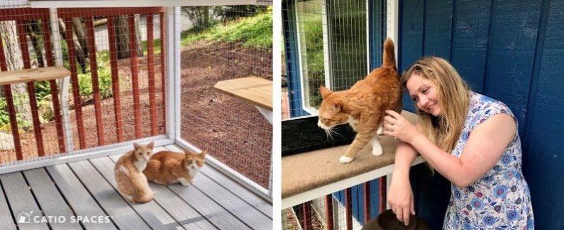 Catio Cat Enclosure 2up Cats Sarah Timeshare Wm Catiospaces