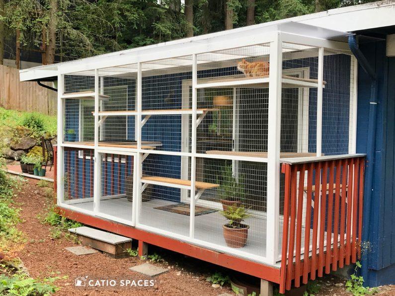 Catio Cat Enclosure Deck Exterior Timeshare Wm Catiospaces