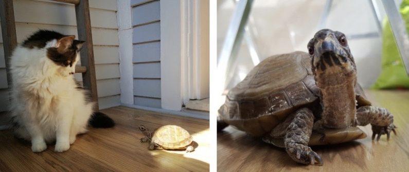 Catio Cat Turtle 2 Up Catiospaces
