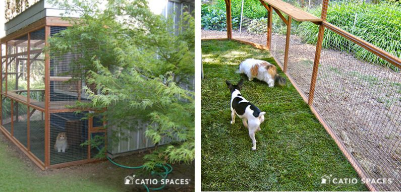 Catio Doggio 2up Walker Ext Grass Catiospaces