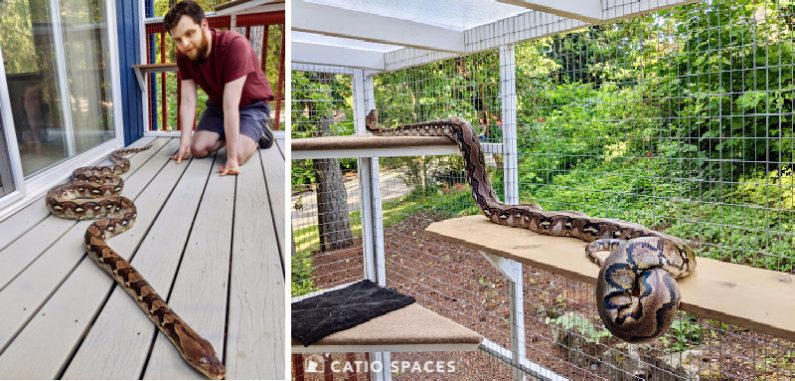 Catio Snake 2up Shaden Python Wm Catiospaces