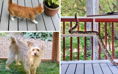 Timeshare Catios for Pets