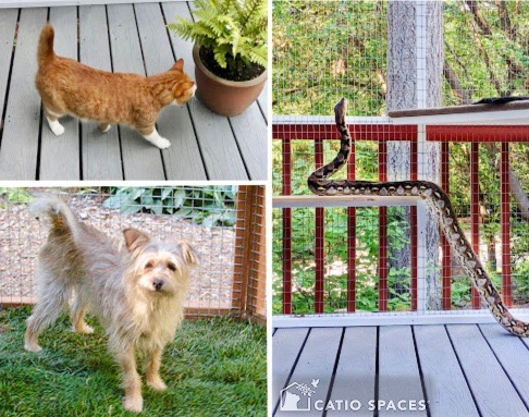 Catio Time Share Pets Enclosures 510 Catiospaces