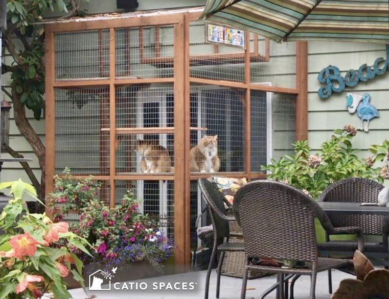 Catio Cat Enclosure Exterior Louie Samplson Sanctuary Catiospace