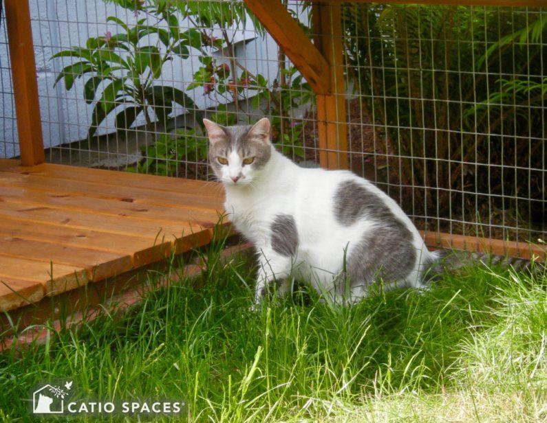 Caito Cat Enclosure Grass Deck Catiospaces