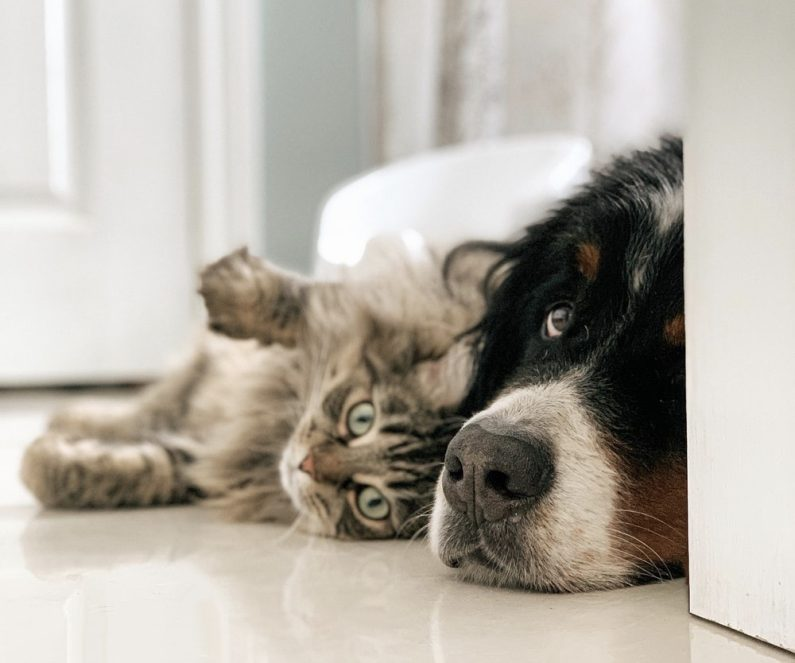 Cat Dog Lying Floor Clip Image002