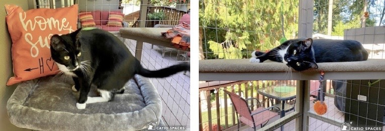 Catio 2 Up Casssie Queen Pillow And Lounging Wm Catiospaces Copy