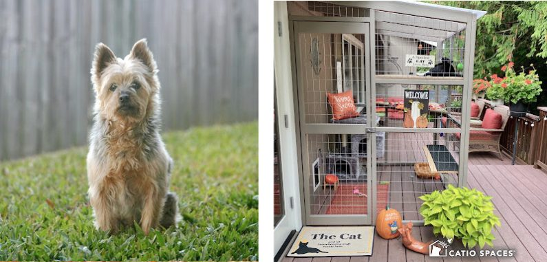 Catio 2 Up Dog Sitting Fence Cassie Deck 2up Pet Safety Catiospaces