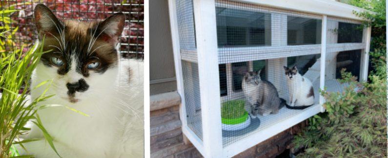 Catio 2up Cat Face 2 Cats Exterior Marci K Catiospaces