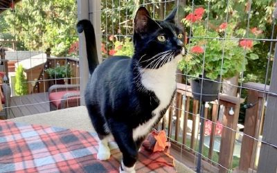 Home Safe Home: Pet Safety and Catios