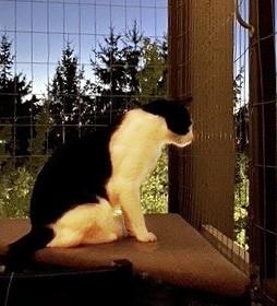 Catio Max Night Watch Deck Cat Enclosure Catiospaces (2) (3)