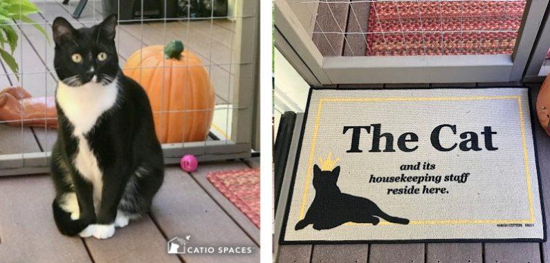 The Cat Catio Spaces